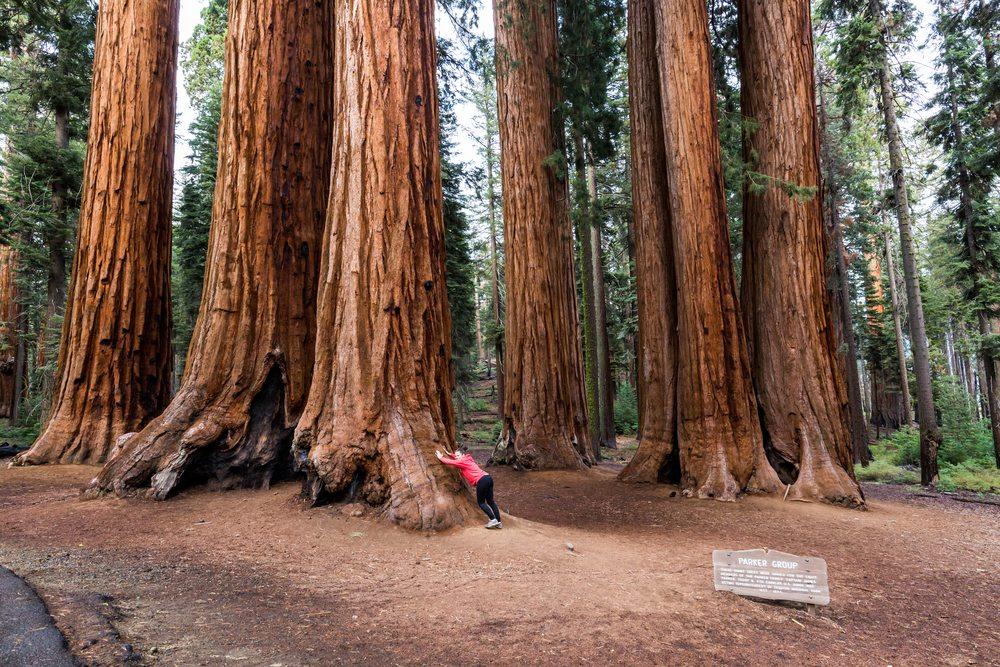 Points Of Interest – National Park System