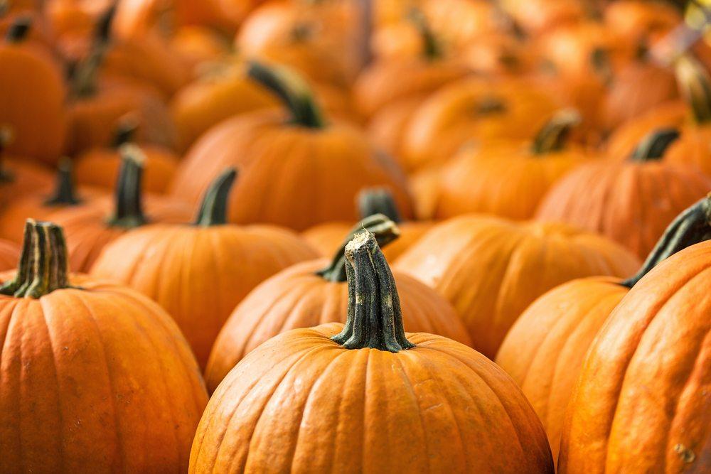 Pumpkins: The Charlie Brown of Vegetables?